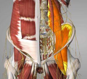 Tight hip flexors representation